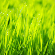 Background green lawn — Stock Photo #4972096