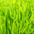 Background green lawn — Stock Photo #4972105