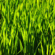 Green lawn — Stock Photo #4972133