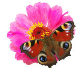 Butterfly and flower — Photo
