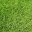 Lawn background — Stock Photo #5036625