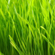 Lawn background — Stockfoto