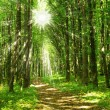 Forest sunlight - Foto Stock