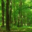 Forest - Stockfoto