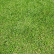 Background green lawn — Stock Photo #5109509