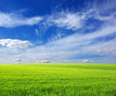 Field and clouds — Foto Stock