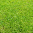 Green lawn — Stock Photo #5167030