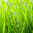 Green lawn — Stock Photo #5167035