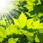 ακτίνες του ήλιου — 图库照片