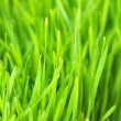 Background green lawn — Stock Photo #5213244
