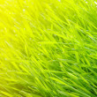 Green lawn — Stock Photo #5213343