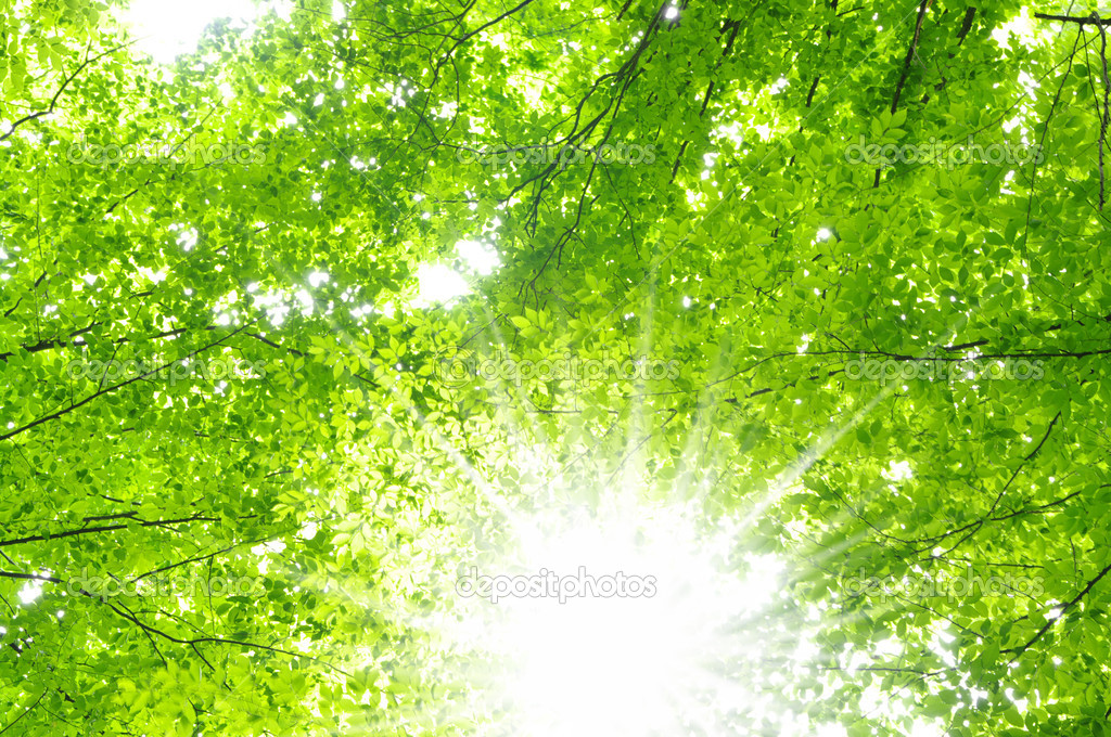 Sun beams and green leaves — Stock Photo #5213308