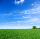 Field with tree — Stockfoto