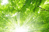 Trees in a green forest — Stock Photo