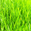 Background green lawn — Stock Photo #5320691