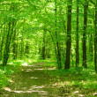 Green forest — Stock Photo #5320753