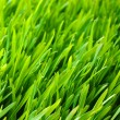 Green lawn — Stock Photo #5367018