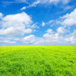 Field and white clouds — Stock Photo #5367195