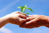 Pěstování zelených rostlin — Stock fotografie