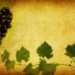 Wine label background — 图库照片 #4033110