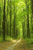 Forêt. — Photo