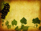 Wine label background — 图库照片