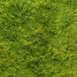 Green lawn — Stock Photo #4276216
