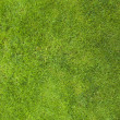 Green lawn — Stock Photo #4278054