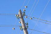 Birds on wires — Stock Photo