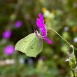 Butterfly on a flower - Photo