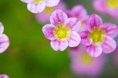 Flor de macro — Foto de Stock