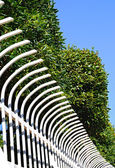 White fence and green bush — Stok fotoğraf