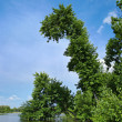 Stock Photo: Trees above river