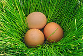 Eggs on the green grass — Stock Photo