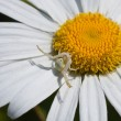 Stock Photo: White spider