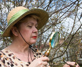 A woman inspects cherry branch i — Stock Photo