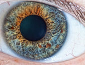Human eye. macro — Stock Photo