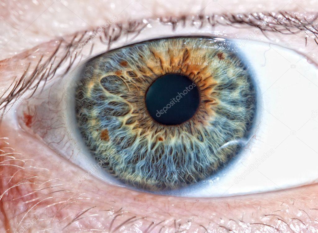 болотный или ореховый цвет глаз фото