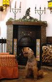 Собака, сидящая рядом с камином — Стоковое фото