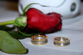 Wedding rings on a background of roses — Stock Photo