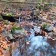 Clear stream in the woods — Foto Stock