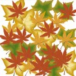 Stock Photo: Autumn foliage