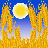 Field with ear of the wheat in the night — Stock Photo