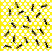 Much bees on honeycomb — ストック写真