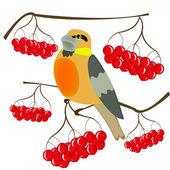 Birdie and berries of rowanberry — Stock Vector