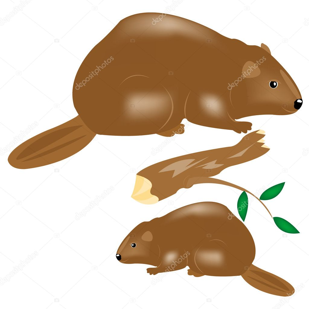 Water animals beavers on white background — Stock Vector #4719756
