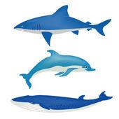 Sea animals on white — Stock Vector
