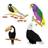 Illustration of the varied birds — Stock Vector