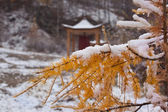 Larch branch and buddhist's pavilion — Stock Photo