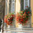 Royalty-Free Stock Photo: Windows with flowers in Budapest